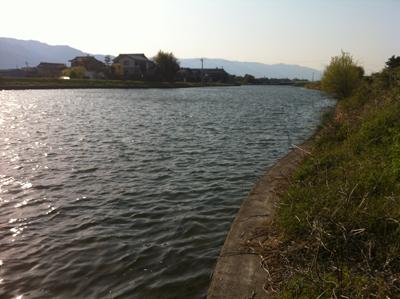 春の大江川
