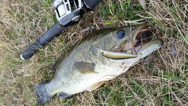 春のオカッパリ釣果情報