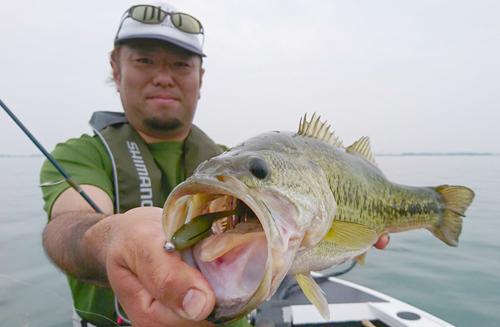 Vテールシャッド4インチの琵琶湖釣果がスゴイ!