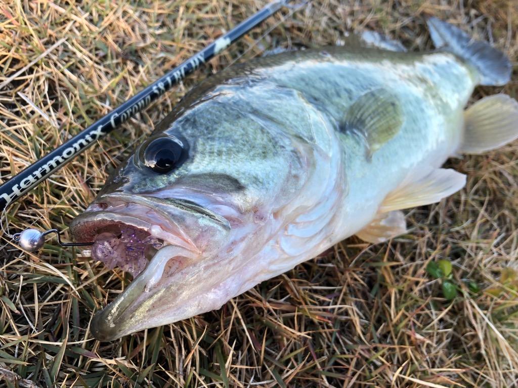 真冬に確実な1匹を釣る為に!